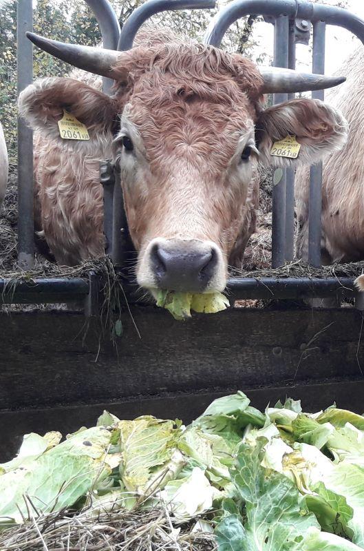 Pflanzgef/ä/ß f/ür K/üchenabf/älle umweltfreundliches PE-Tuch Garten Bio-Kompostbeutel Haude Bio-M/üllbeutel f/ür K/üche Hof Kompost